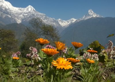 Himalayai trek - Virágok - Annapurna