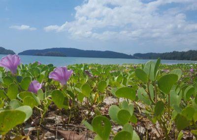 Thaiföld tengarpart ás virágok