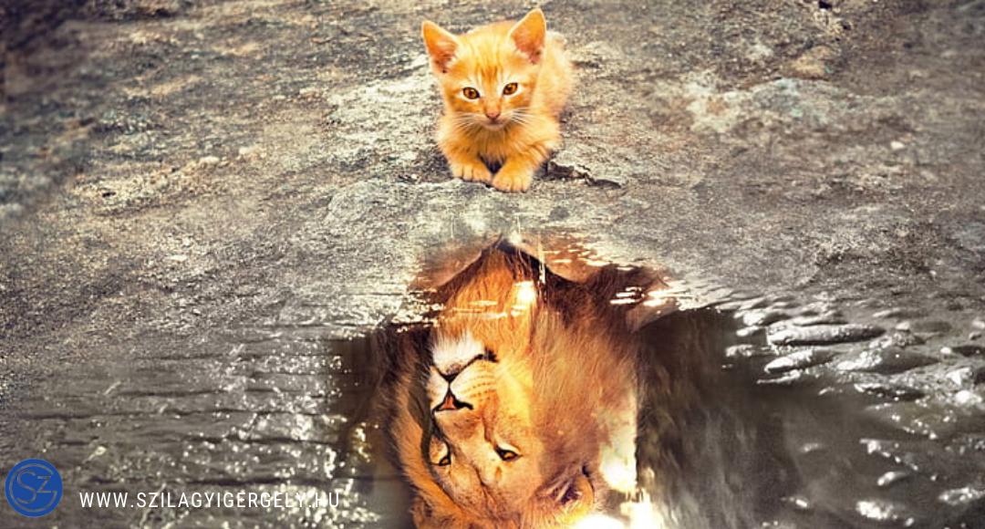A macska, aki oroszlán akart lenni